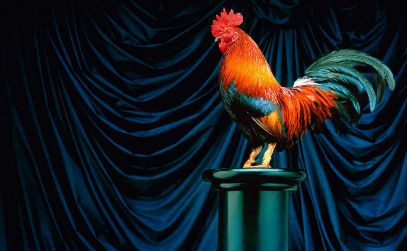 鸡年话鸡:你真了解这个天天出现在餐桌上的家伙吗?