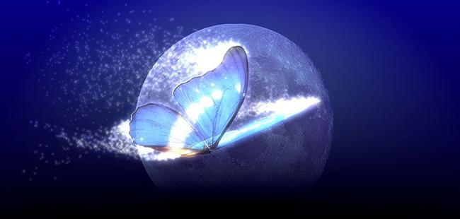 亚马逊的蝴蝶效应:Firefly能否扇动移动搜索风暴?