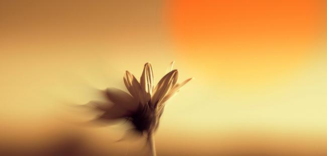 Path 登陆 WP 平台:播在荒漠里的种子焉能开花