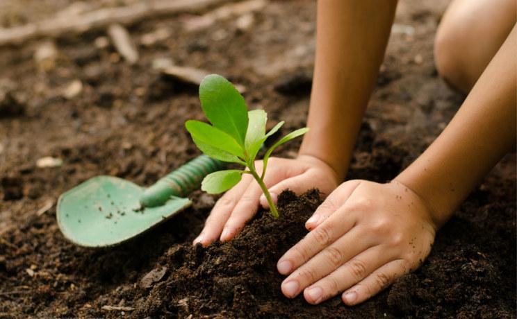 不知不觉中,我用支付宝在沙漠种了棵树