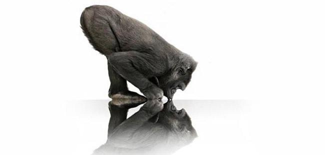 让「大猩猩」变得更聪明| 极客早知道 2014 年 6 月 20 日