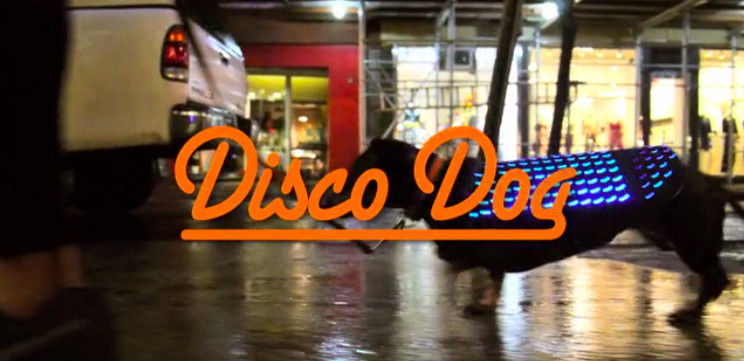 Disco Dog:汪星人的「迪士科」马甲