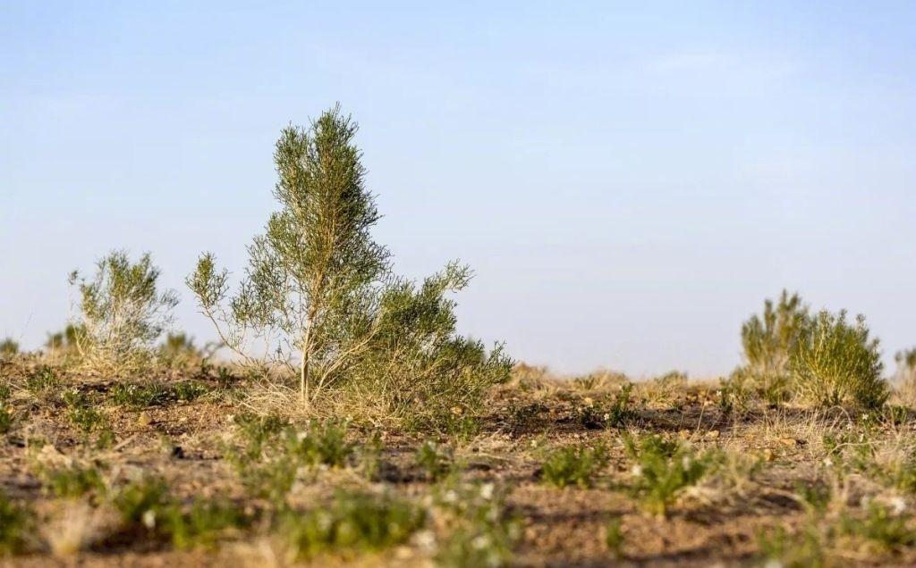 蚂蚁森林开启「找树」计划,力推阿里巴巴「人人行动」的公益理念