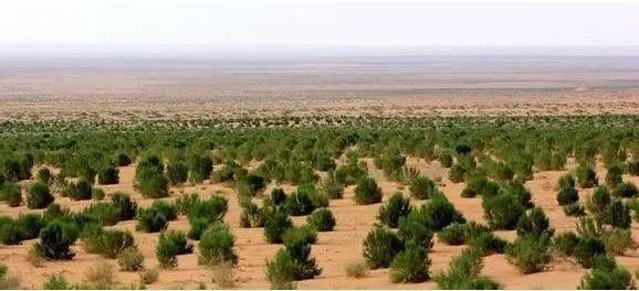 不知不觉中,我用支付宝在沙漠种了棵树-第4张图片-易贝塔