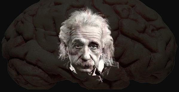 【完全极客养成指南】大脑的秘密